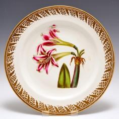 Derby Porcelain Botanical Plate Amaryllis Vittata  c1795