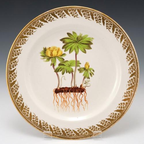 A Derby Porcelain Botanical Plate Pattern 115 'Winter Hellebore' c 1795