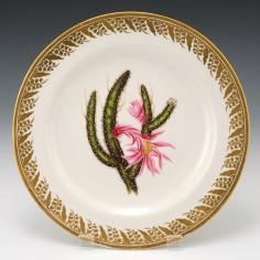 "A Derby Porcelain Botanical Plate Pattern 115 ""Creeping Cereus"" c1795"