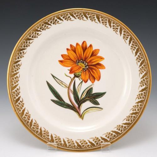A Derby Porcelain Botanical  Botanical Plate Pattern 115 Rigid Leav'd  Gorteria  c1795