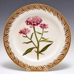 A Derby  Porcelain Botanical Plate Candy Tuft c1795