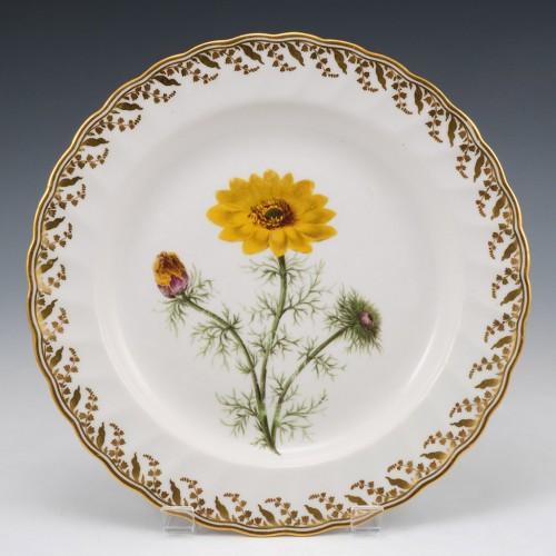 Derby Porcelain Botanical Plate c1795