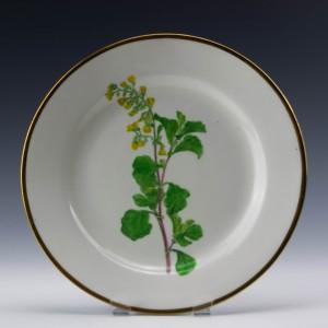 Swansea Alder Leaved Hermannia Botanical Plate c1810