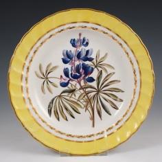 A Derby Pattern 216 Botanical Dessert Plate Lupinus Perennis c1800